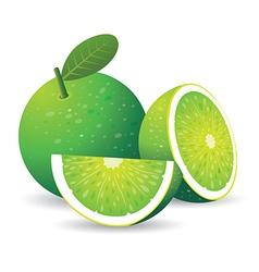 green lemon vector image vector image