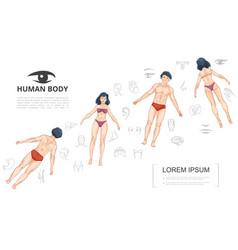 Cartoon human anatomy template vector