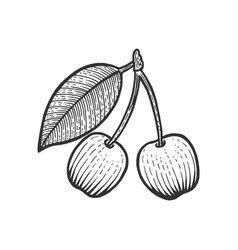 cherry berry fruit sketch engraving vector image