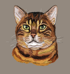 Colorful bengal cat vector