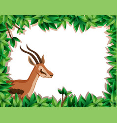 Gazelle in nature frame vector
