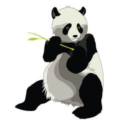 Giant panda or ailuropoda melanoleuca vector