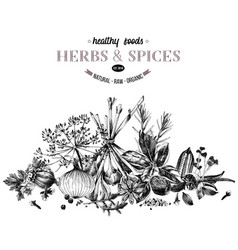 hand drawn border with herbs and spices vector image