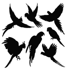 Parrots amazon jungle birds silhouettes vector
