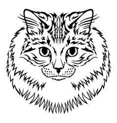 siberian cat vector image vector image
