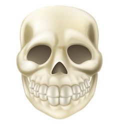 cartoon halloween scull vector image