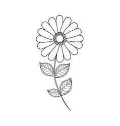flower daisy floral decoration line vector image
