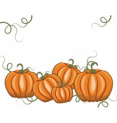 Fresh Pumpkins on white vector image