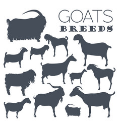 goat breeds icon set animal farming flat design vector image