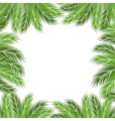 Leaves of palm vector image vector image