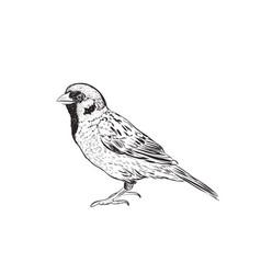 sparrow sketch hand drawing sketch vector image