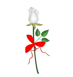 A Lovely White Rose with Red Ribbon vector image