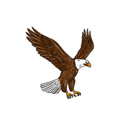 bald eagle flying drawing vector image