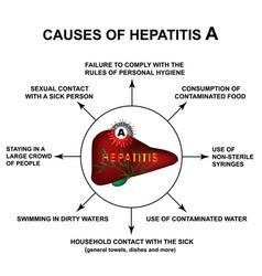 Causes hepatitis a world hepatitis day vector
