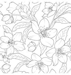 Christmas winter rose hellebore floral pattern vector