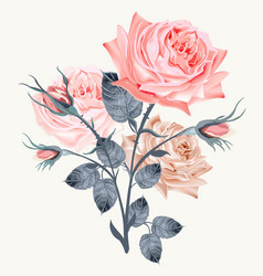 elegant and beautiful pink rose on white vector image