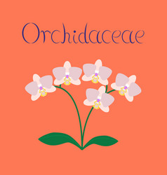 Flat on background flower orhidaceae vector
