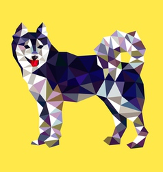 Siberian husky dog low polygon style vector