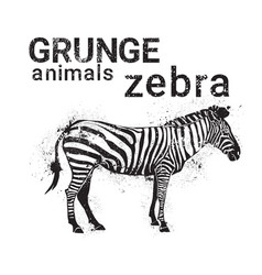 silhouette zebra in grunge design style animal vector image