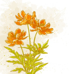 Cosmos flowers on textured background vector image