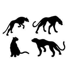 drawn jaguar leopard wild cat panther vector image