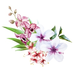 Nice orchids vector