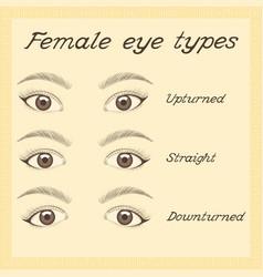 various female eye types vector image