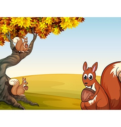 Three squirrels with nuts at the big tree vector image