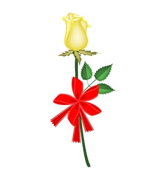 a lovely yellow rose with red ribbon vector image