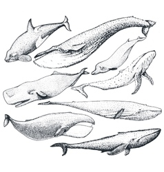 set hand drawn whales vector image