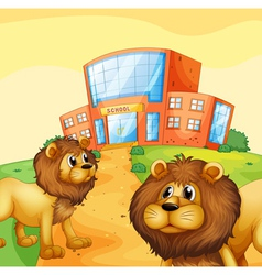 Two wild lions in front a school building vector