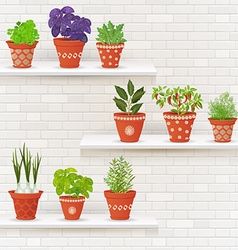 vintage collection of planted different herbs in vector image