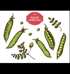 Collection hand drawn colored peas vector