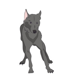 dog stands vector image