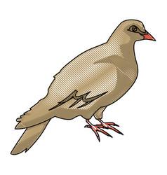 dove of peace nature animal concept icon vector image