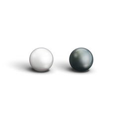 realistic two black and white pearls closeup view vector image