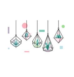 Terrarium succulent cactus geometric hanging vector