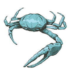 With a large blue sea crab-ghost vector