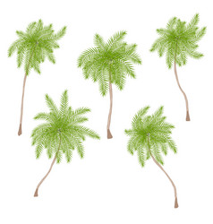 set of stylized palm trees isolated on white vector image