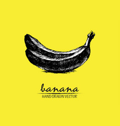 digital detailed banana hand drawn vector image