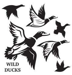 set of flying wild ducks vector image