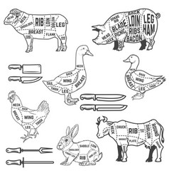 Diagram guide for cutting meat for lamb goose vector
