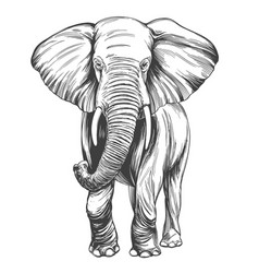 elephant hand drawn realistic vector image