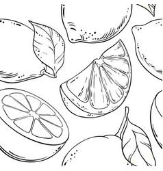 lemon fruit pattern on white background vector image