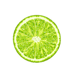 Lime slice of citrus vector