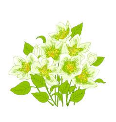 spring flowers jasmine vector image