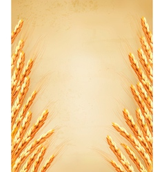 Ears of wheat on old paoer vector image vector image