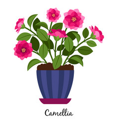 Camellia plant in pot vector