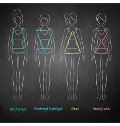 Chalked female body types vector image