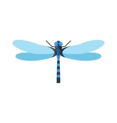 Dragonfly anax imperator male blue emperor with vector image